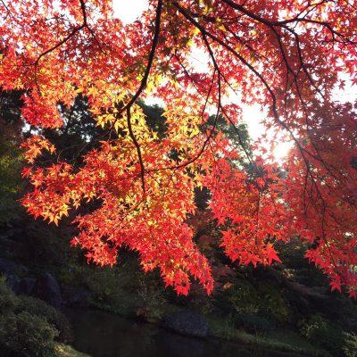 紅葉を観に行きました